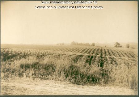 Corn field, Waterford, ca. 1905