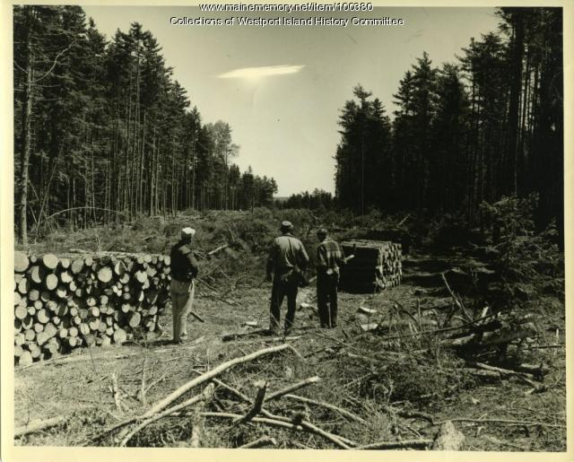 Forestry fire lane, MacMahan Island, 1957