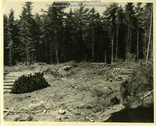 Managed clear cutting, MacMahan Island, 1957