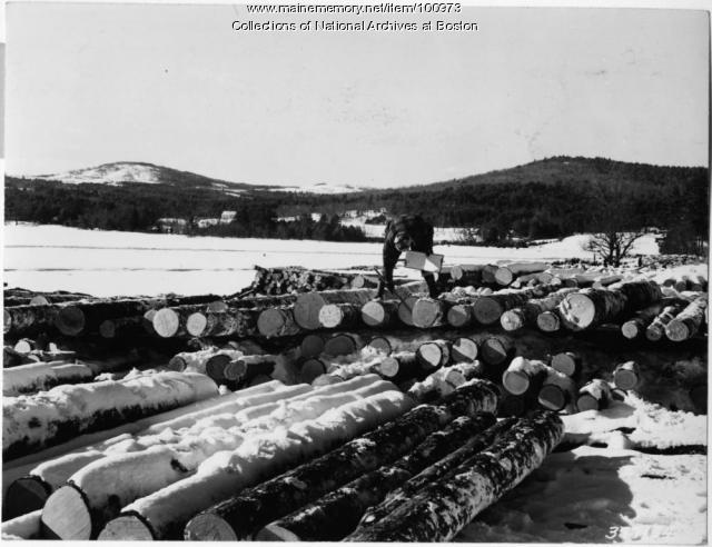 U.S. Forest Service scale measuring logs, Bear Pond, 1939