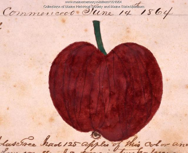 Belles Early apple, Bangor, 1864
