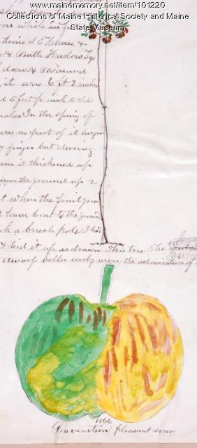 Gravenstein apple, Bangor, 1866