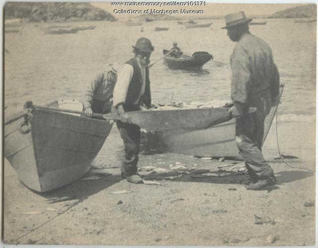 Hauling fish with drudge-barrow, Monhegan, ca. 1880