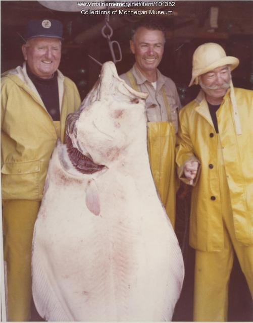 Halibut catch, Monhegan, 1970