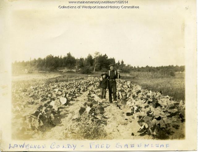 Cabbage patch, Westport Island, ca. 1907