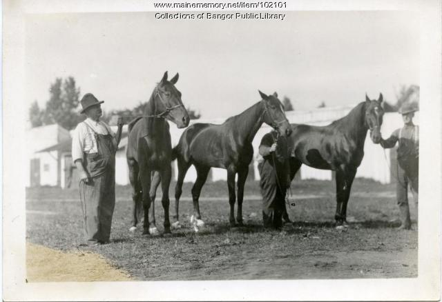 Race horses with keepers at Bass Park, Bangor, ca. 1915
