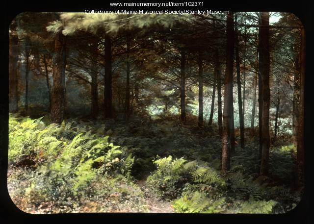 Fern path, New Hampshire, ca. 1910