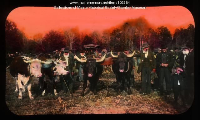 Men with show oxen, West New Portland, ca 1910