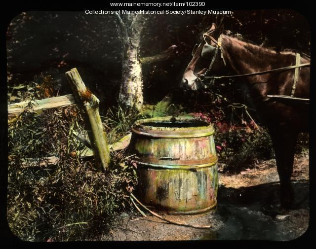 Horse at water barrel, ca. 1910