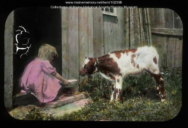 Feeding the calf, Chesham, NH, ca. 1910