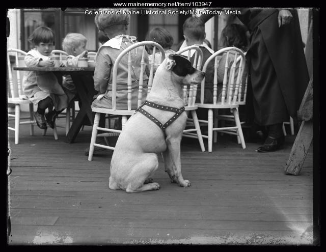 Dog at Portland Day Nursery, Portland, ca. 1923