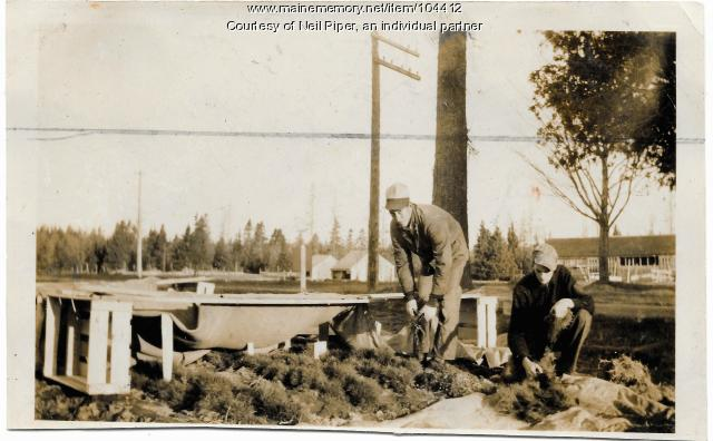 Reviewing tree seedlings, Troy, ca. 1940