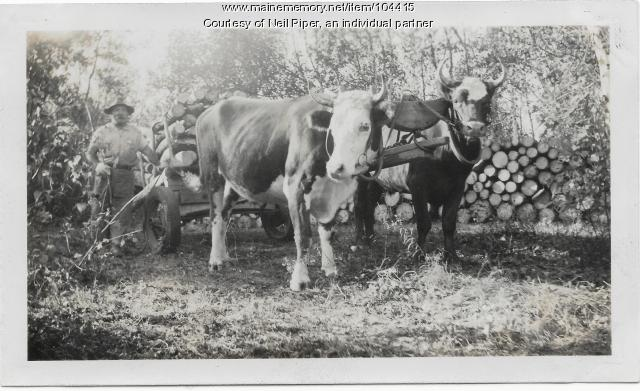 Logging with oxen on Town Forest land, Troy,  ca. 1940