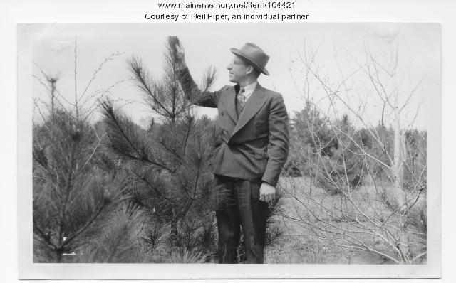 Al Nutting inspecting Norway pine, Troy, ca. 1950