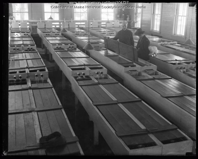 Men working at fish hatchery, ca. 1930