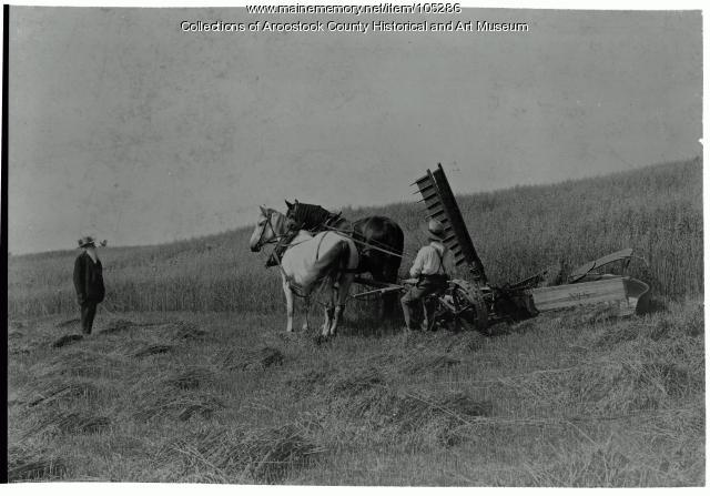 The McCormick Daisy Reaper, Houlton, ca. 1895