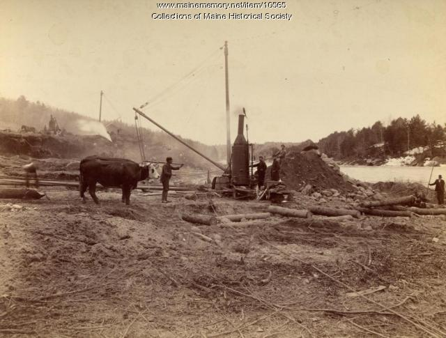 Team of oxen at Pejepscot Paper Co. dam site, Topsham, 1893