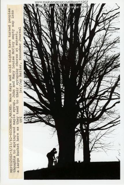 Maple syruping, Richmond, 1982