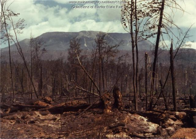 Burned trees, Baxter State Park, 1977
