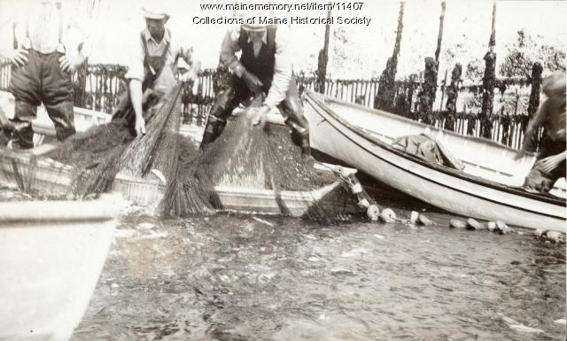 Seining the sardine weir, Eastport, 1931