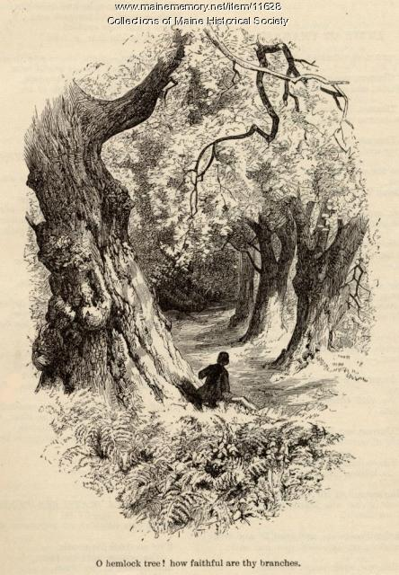 Illustration for The Hemlock Tree, ca. 1880