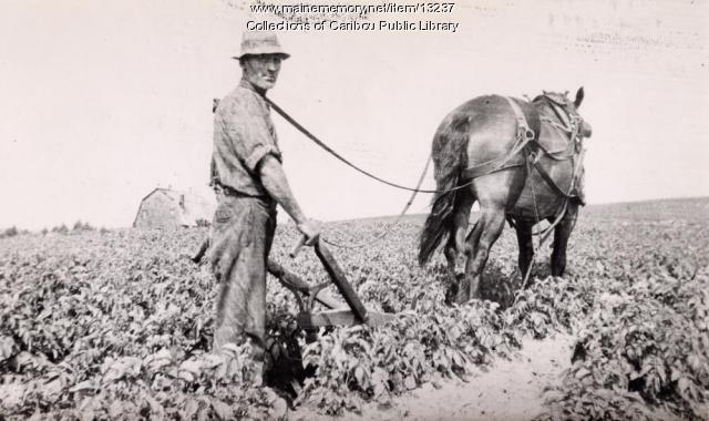 Potato hoeing, Caribou, ca. 1930