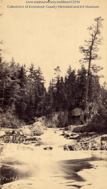 Old Pine on East Hastings Brook, 1892