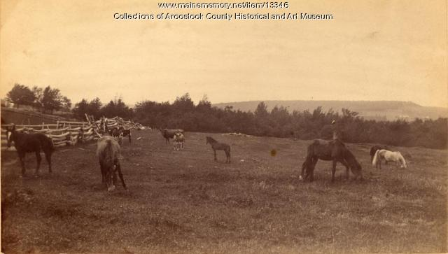 Maggie Finnigan's pasture, East Hodgdon