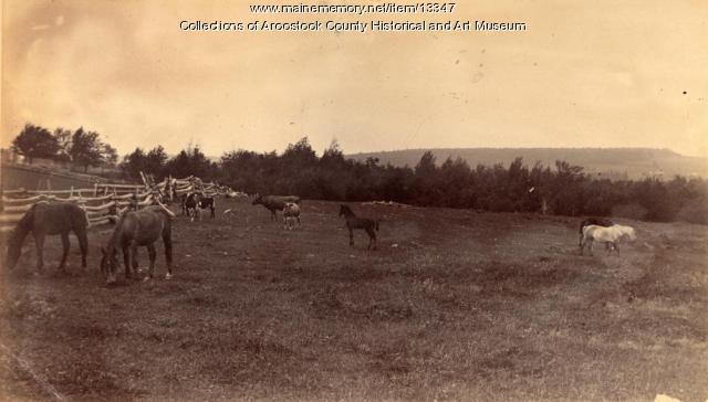 Pasture, East Hodgdon, ca. 1890