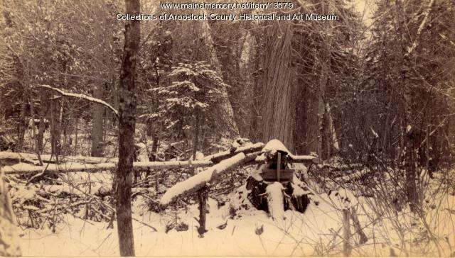 Bear dead fall trap, ca. 1895