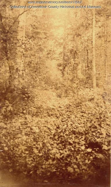 Near the Umculcus Stream, c. 1895