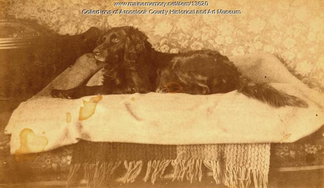 E. B. White's dog, Toby, Houlton, ca. 1890