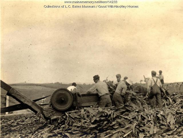 Cutting corn, Fairfield, 1916