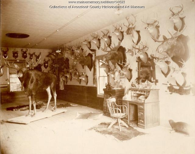 Frank R. Wilson Taxidermist shop, Houlton, ca. 1900