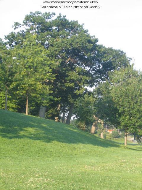 Domes of Trees of Deering's Woods, 2004