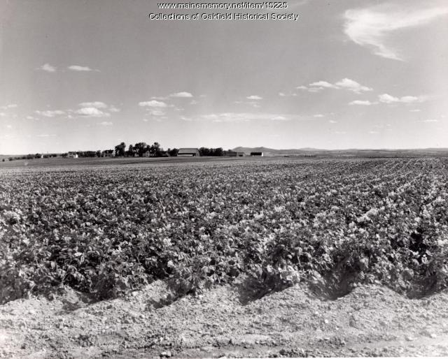 Aroostook County potato field, ca. 1965