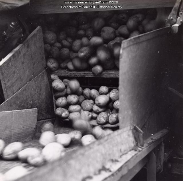 Potato delivery, Aroostook County, ca. 1960