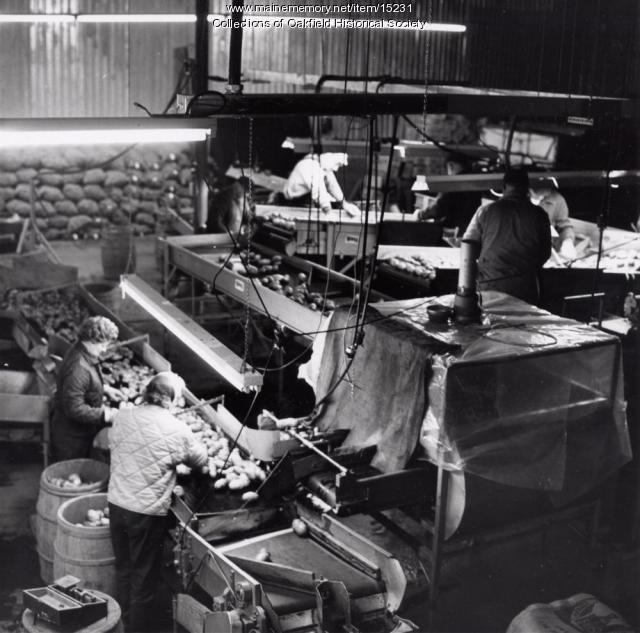 Potato Processing, Mars Hill, 1966