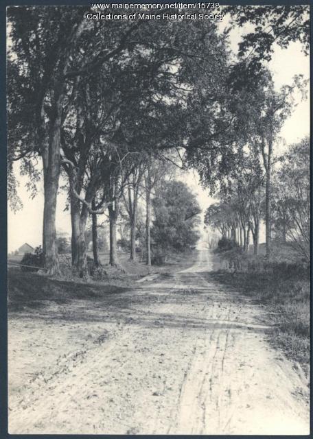 Longfellow elm trees, 1908