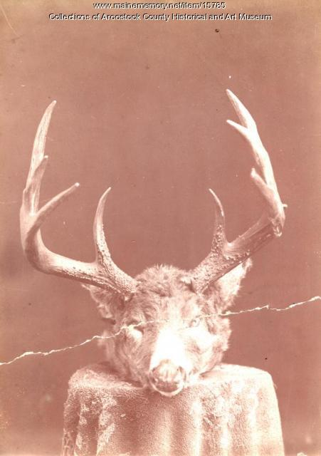 A Trophy Deer Head, Charles West, c. 1890