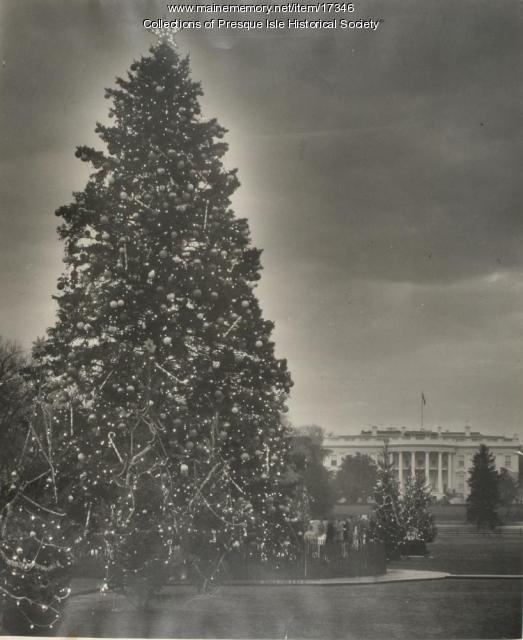 White House Christmas Tree from Maine, 1959