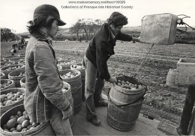 Loading Potato Barrels, Presque Isle, 1976