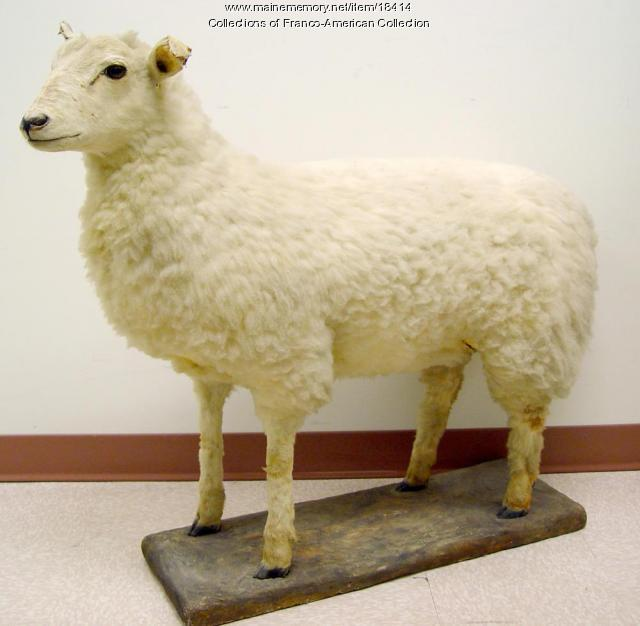 Stuffed sheep, Lewiston, ca. 1890s