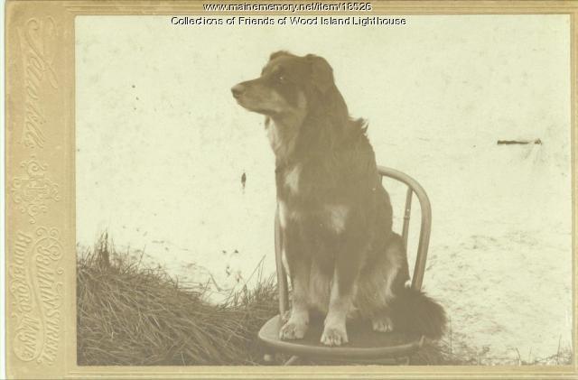 Sailor, family dog, Wood Island Lighthouse, ca. 1903