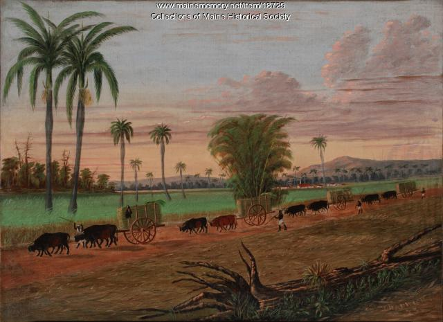 Sugar cane harvesting in Cuba, 1873