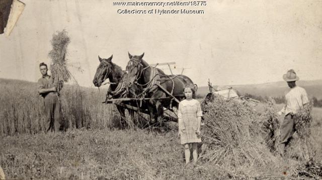 Wheat harvest, New Sweden, ca. 1922