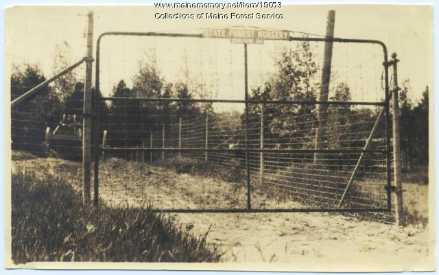 State Forest Nursery, Greenbush, ca. 1956