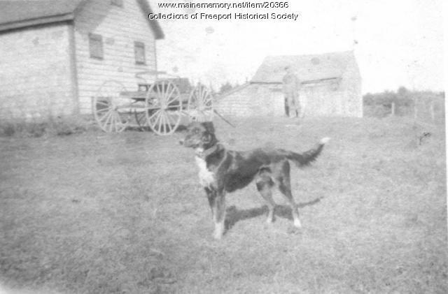 Trixie, Pettengill farm dog, ca. 1920