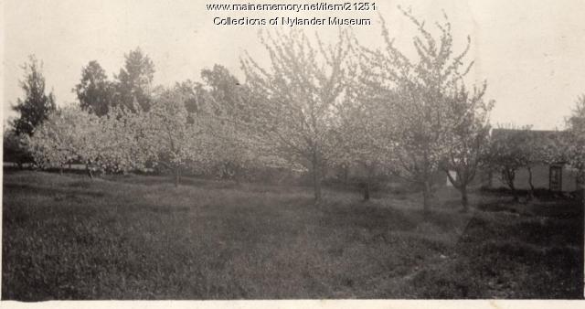 Orchard, Woodland, ca, 1922