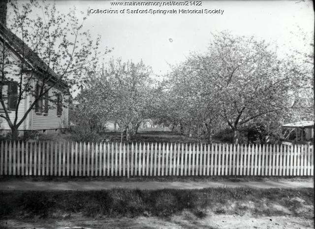 Howard Bennett's Orchard, Elm Street, Sanford, ca 1910